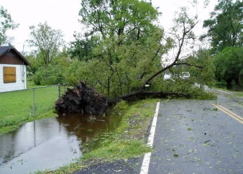 Mail Boss Parts Oak Tree in Hurricane Ike