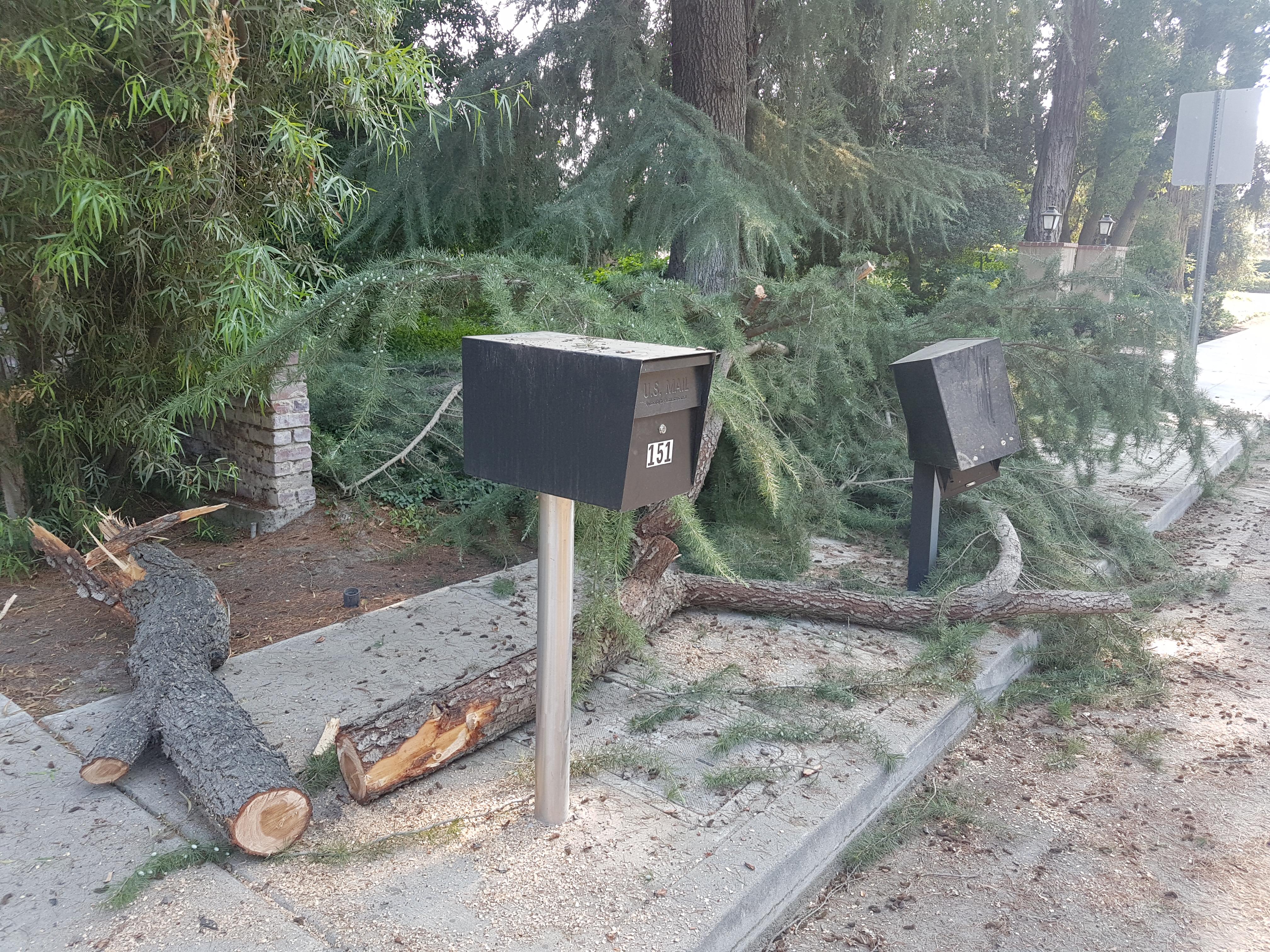 Testimonial: Mail Boss vs. Tree